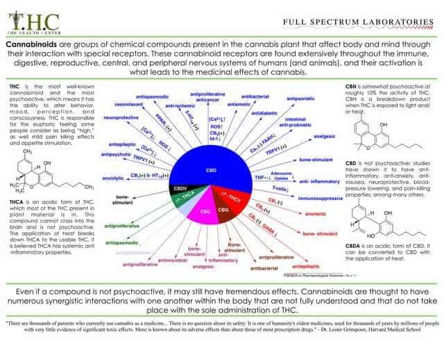 THC & CBD infographic